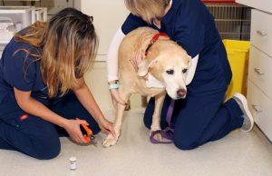 Dog Wellness Exam