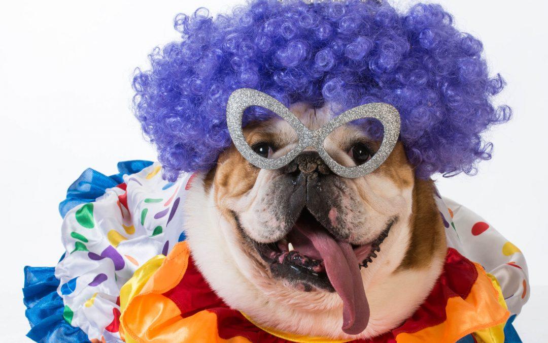 Pet Halloween 101
