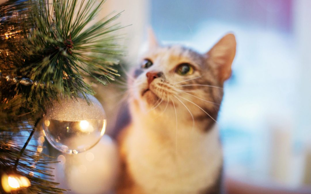 Ensuring Happy Holidays with Pets