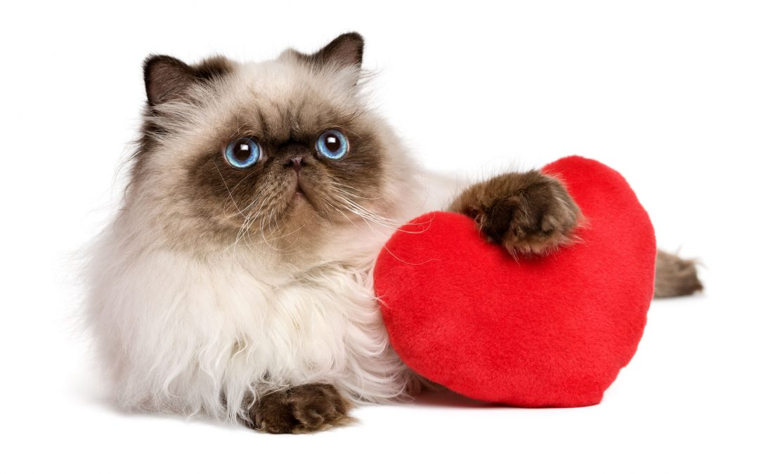 10 Reasons Pets Make the Best Valentine Dates