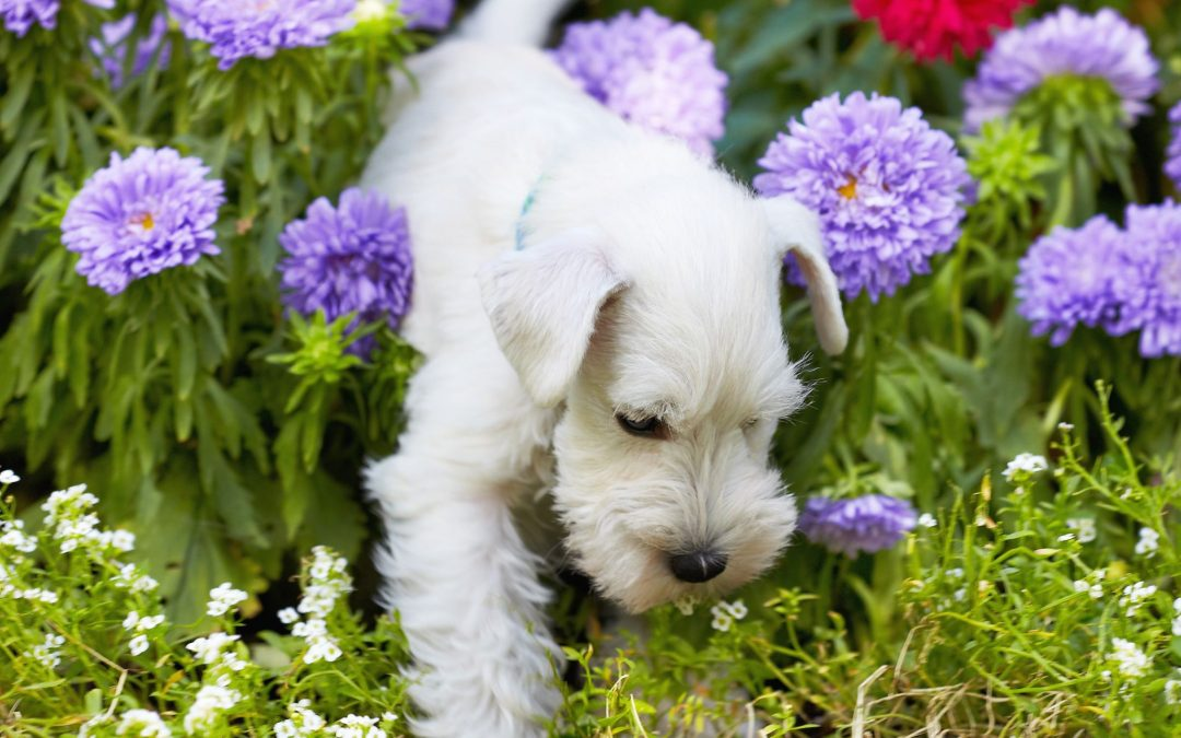 Safe Flowers and Plants for Your Dog