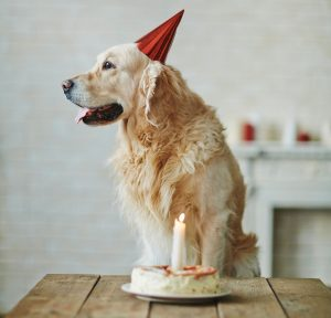 birthday party for your pet