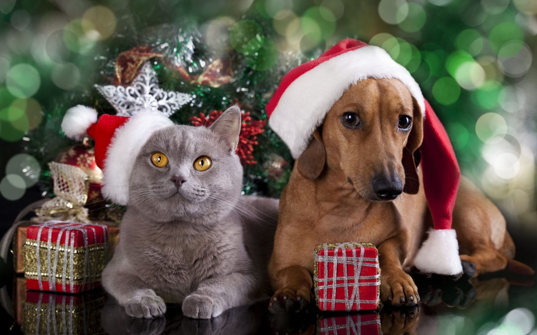 Gift Ideas for Your Favorite Furry Friends