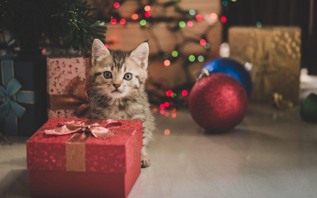Holiday Pet Hazards