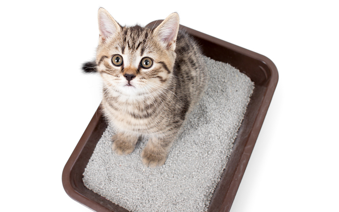 Keeping Your Cat Content Part 2: Litter Box 101