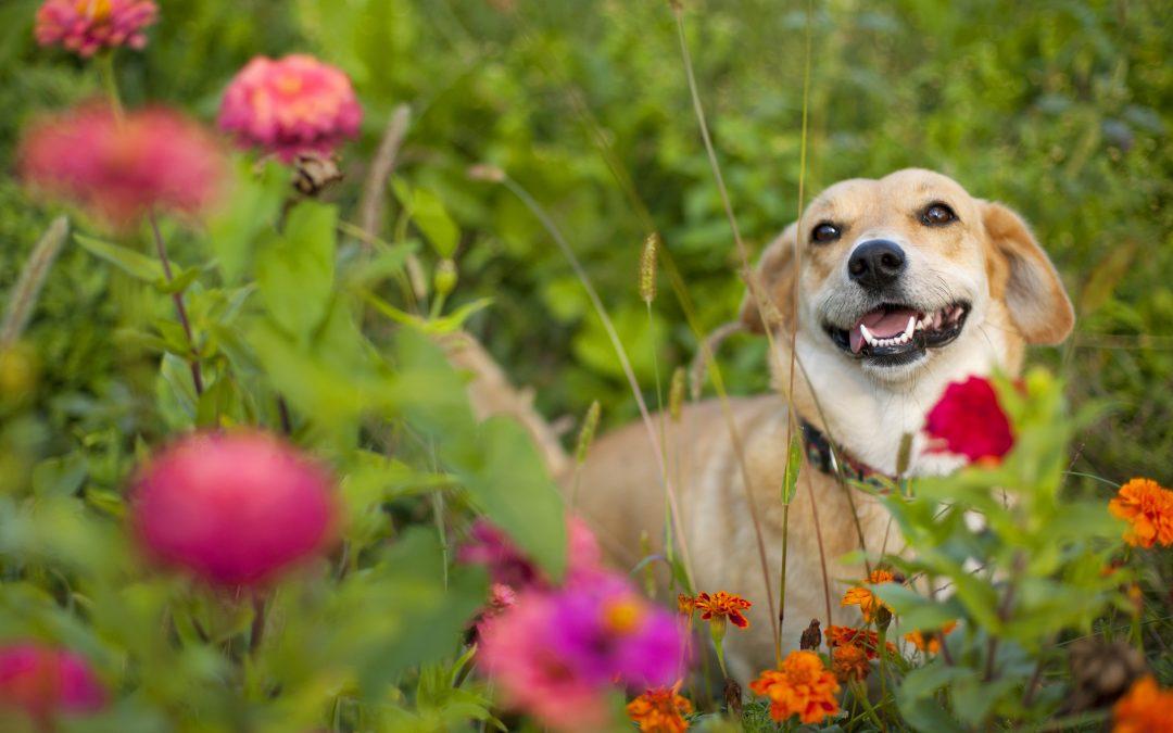 Spring Pet Hazards