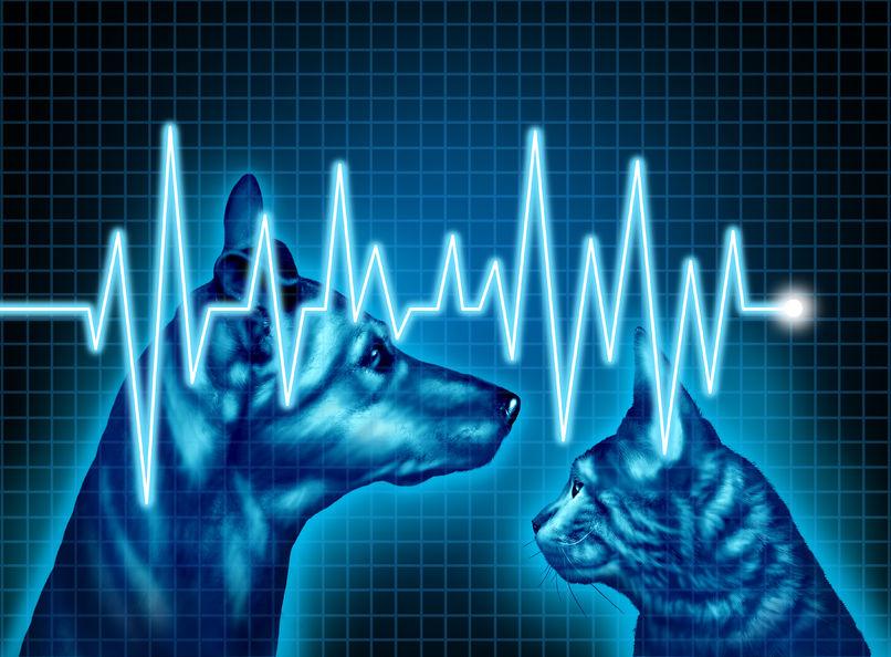 Pet Emergency Signs
