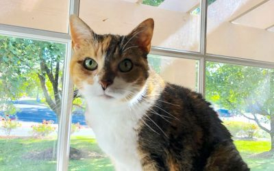 Pet Adoption Opportunities– Give Tess a Loving Home