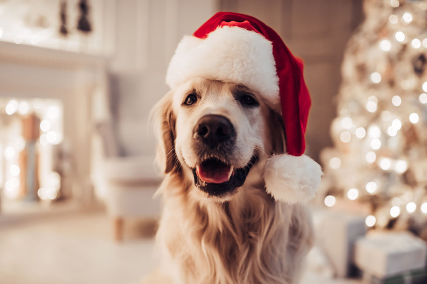 LVC is Grateful for Our Pets This Holiday Season