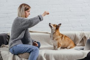 Use this time of social distancing to work on puppy training, tricks, and bonding with your pet at home.