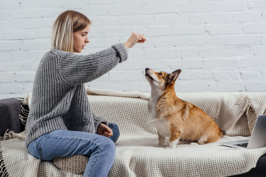 Home with Your Pets