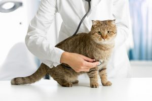 Longwood Veterinary Center is a Cat Friendly Practice, and we pride ourselves on providing exceptional care for cats in a stress free envirionment.