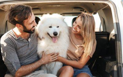 Raising a Well-Adjusted Dog