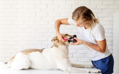 3 Essential Tips to Caring for Your Pet's Teeth