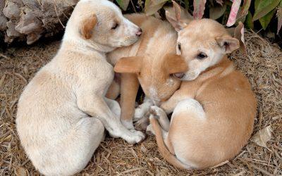 International Homeless Animals Day